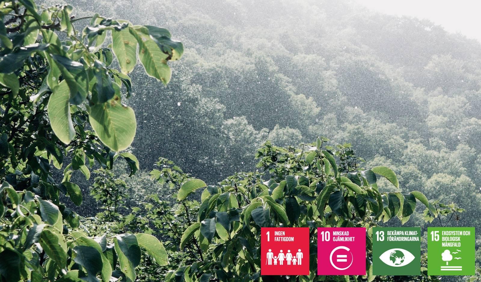 Climate Firsts projekt i Brasilien - stöttar mål 1, 10, 13 och 15